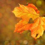 Danças Circulares e a Páscoa, no Outono